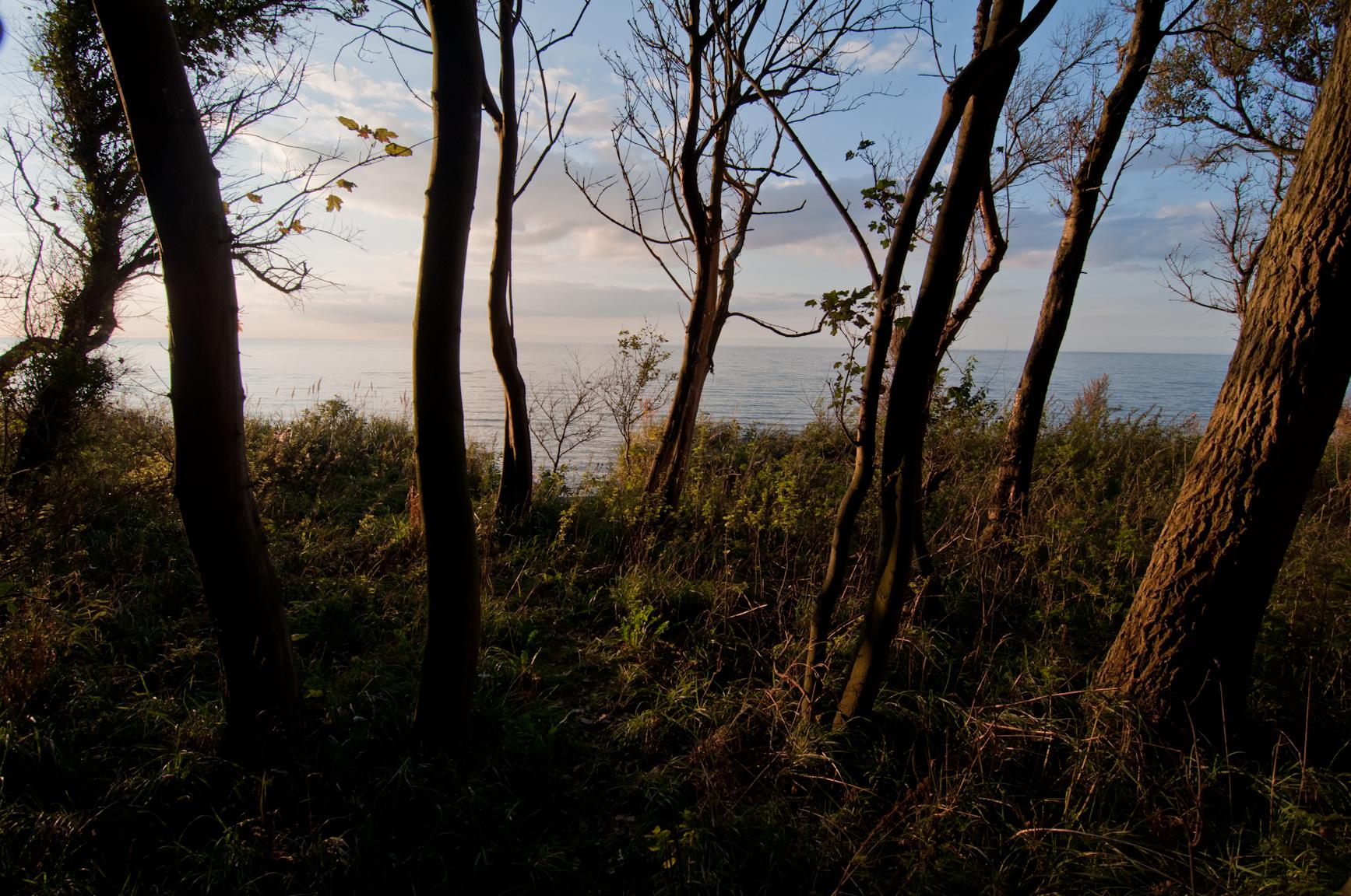 Insel Poel, Blick durch den Küstenwald